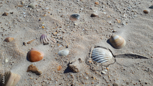 Foto Closeup of beach shells on the sand