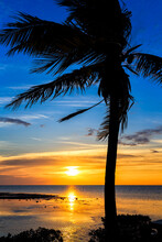 Scenic View Of Palm Trees On B...