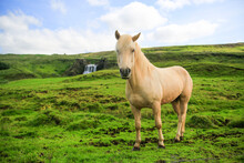 Icelandic Horse Standing On Grassy Landscape With Waterfall In Background