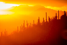 Scenic View Of Saguaro In Sono...