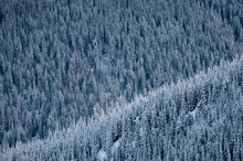 High Angle View Of Snowy Trees...