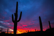 Silhouette Of Saguaro Plants In Desert During Sunset