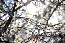 Sun Shining Through Branches Covered With Ice After Winter Storm