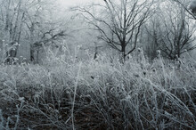 Gloomy Winter Forest During Fo...