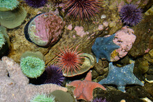 Colorful Marine Life In Tide P...