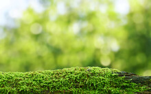 Green Mossy Log Background For...