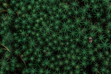 Areal View Of Green Plants Growing In A Forest In Sweden