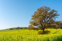 Beautiful Shot Of A Green Field