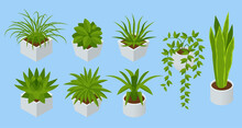 Isometric Set Of Indoor Flowers Isolated. Succulents And House Plants