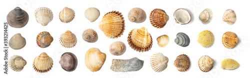 Tela Multicolored Seashells Collection Isolated on White Background