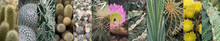 Various Cactuses Collage, Different Cactus Collection, Mix