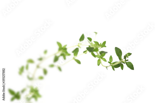 Fototapety, obrazy: Thyme on white background - close-up