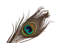 Peacock Feather Isolated On A ...