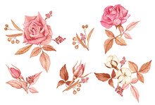 Beautiful Compositions Of Rose...