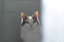 Gato Felino Modelo A Contraluz