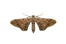 Beautiful Moth Isolated On Whi...