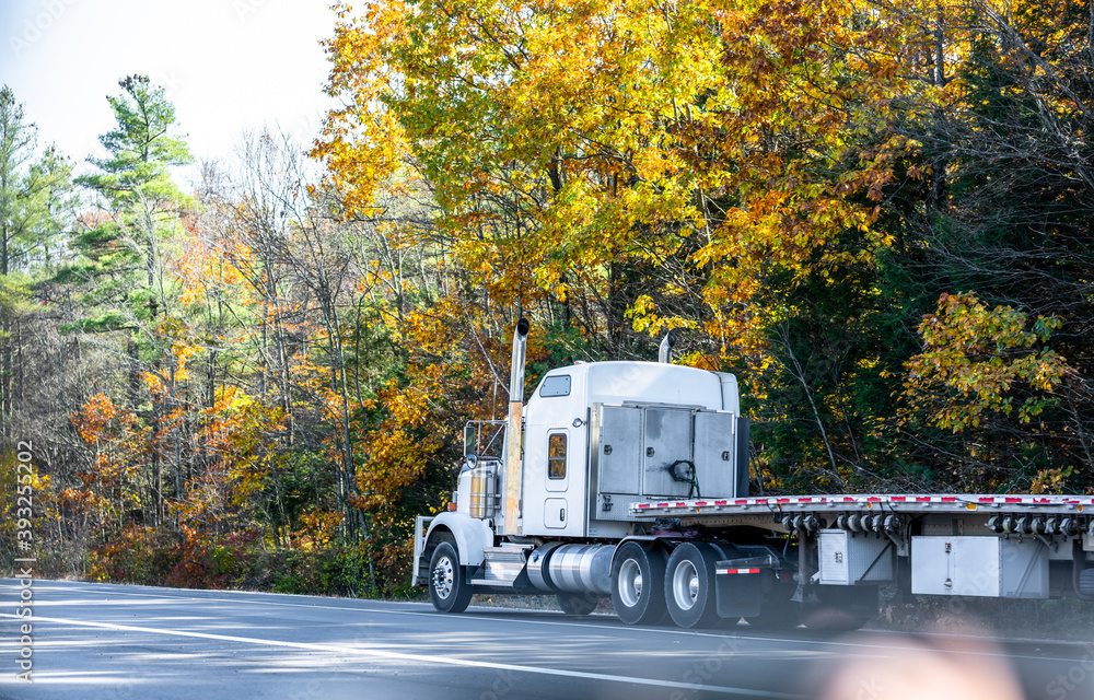 Fototapeta Classic white big rig semi truck with empty flat bed semi trailer driving on the autumn road with yellow maples