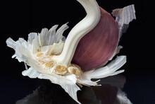 Macro Shot Of Garlic Head Isolated On Black Background