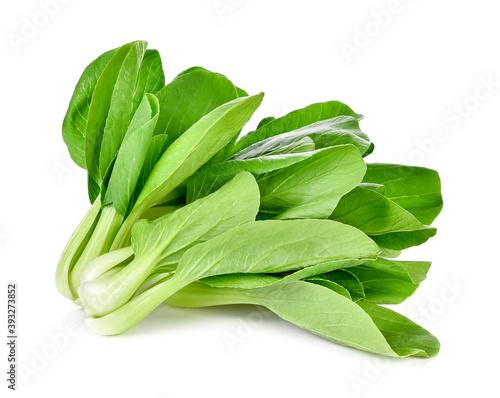 Fototapety, obrazy: Bok choy vegetable on white background
