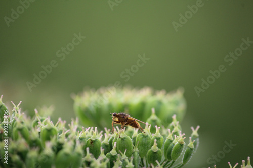 Selective focus shot of a bug on ablooming flower in the greenery Canvas Print