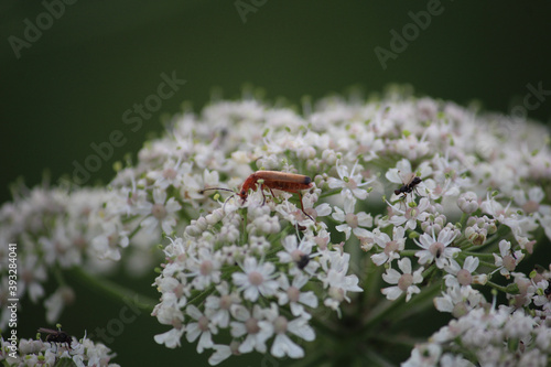 Photo Selective focus shot of a bug on ablooming flower in the greenery