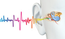 Human Ear Anatomy With Colorful Sound Wave, Medically 3D Illustration