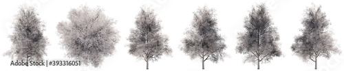 Fototapeta Set or collection of drawings of Ginkgo trees isolated on white background . Concept or conceptual 3d illustration for nature, ecology and conservation, strength and endurance, force and life obraz