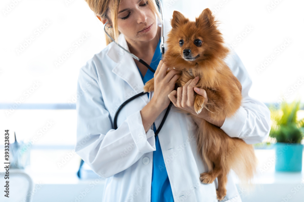 Fototapeta Beautiful young veterinarian woman using stethoscope to listening to the heartbeat of cute lovely pomeranian dog at veterinary clinic.