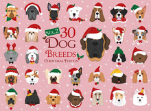 Set Of 30 Dog Breeds With Christmas And Winter Themes. Set 2