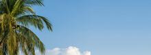 Palm Trees Against Blue Sky Ba...