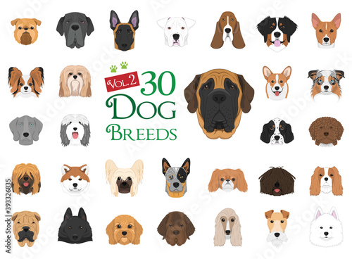 Obraz Dog breeds Vector Collection: Set 2. 30 different dog breeds in cartoon style. - fototapety do salonu