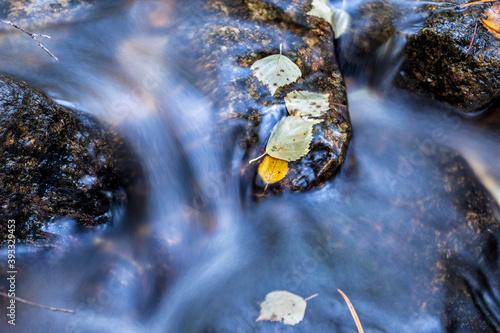 Fotografia Hojas de otoño en el arroyo de Sestil en la Sierra de Guadarrama