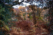 View Through Ferns And Trees To A River And Trees In Autumn Winter Time