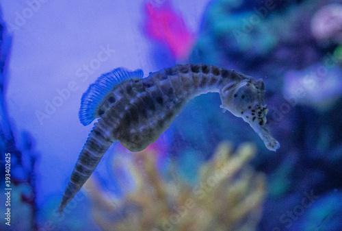 Hippocampe Fotobehang