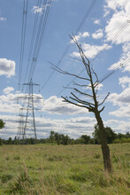 Environmental Image Of A Dead Tree Under Electric Lines And Pylons.
