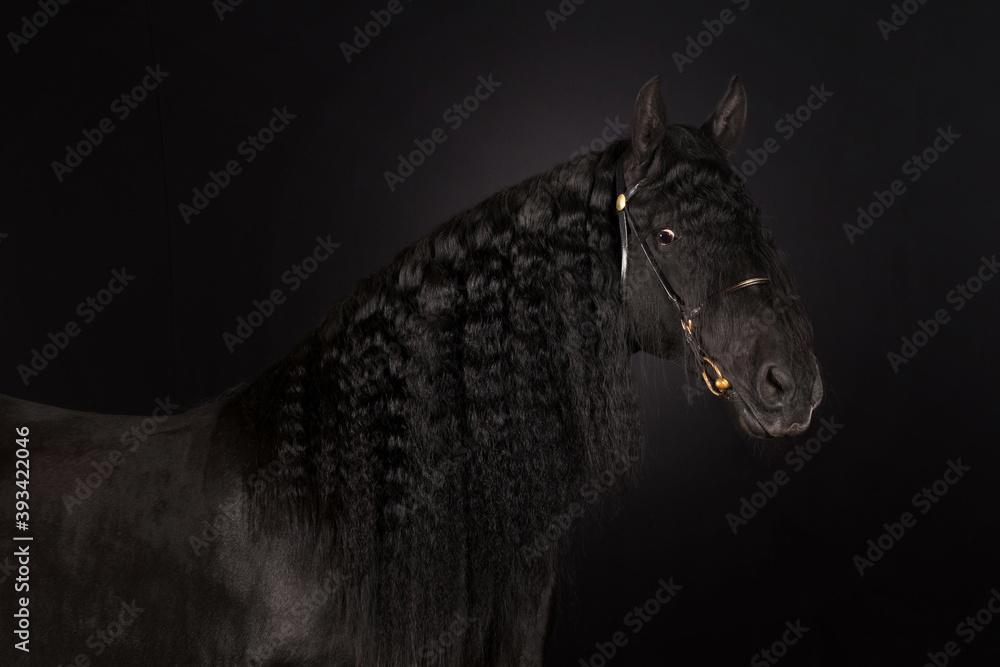 Fototapeta black horse portrait