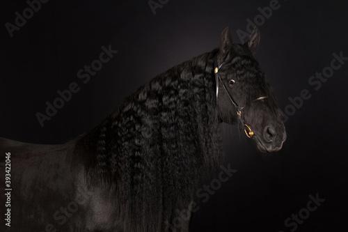Obraz black horse portrait - fototapety do salonu