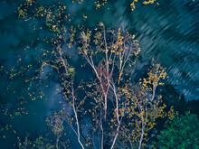 Fallen Trees Floating On Lake ...