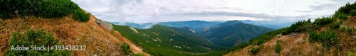 Fototapeta beautiful panorama with alpine pine and mountains under blue sky obraz