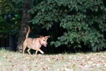 Dog Walking In Public Park