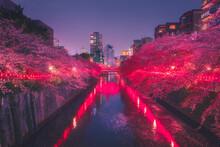 Meguro River Amidst Illuminate...