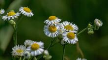 White Flower Yellow Center