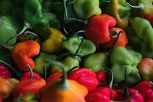 Colorful Scotch Bonnet Peppers
