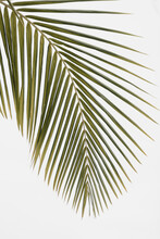 Large Curved Palm Leaf Against...