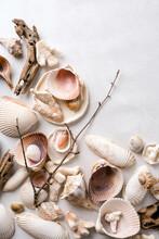 Still Life Of Sea Shells