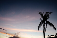 Silhouette Of Palm Tree Leaves At Sunset