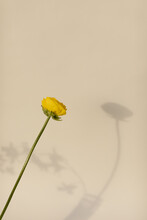 Single Yellow Flower With Long...