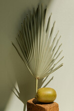 Still Life Of A Palm Leaf And ...