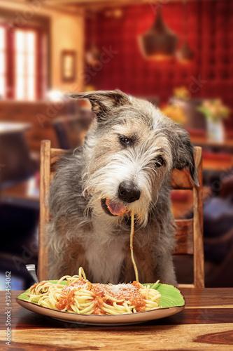 Obraz Funny Dog Eating Pasta at Restaurant - fototapety do salonu