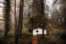Nice Forest With A House And Trees Surrounded By Fog